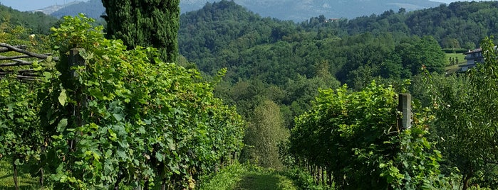 Azienda Agricola Il Belvedere is one of Macさんの保存済みスポット.