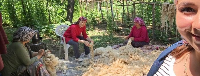 Ertuğrul: сохраненные места