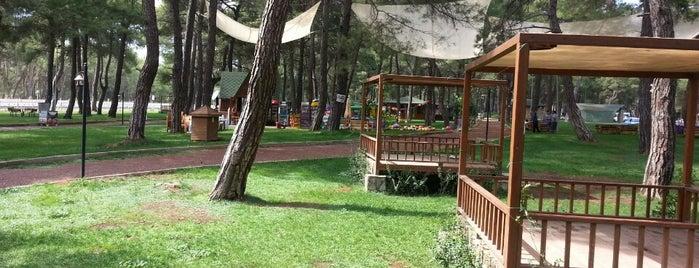 Düzlerçamı Mesire Alanı is one of Antalya genel gezilir.