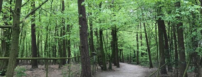 Tierpark Sommerhausen is one of Idegenben.