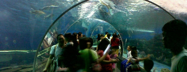 Manila Ocean Park is one of Glenn.