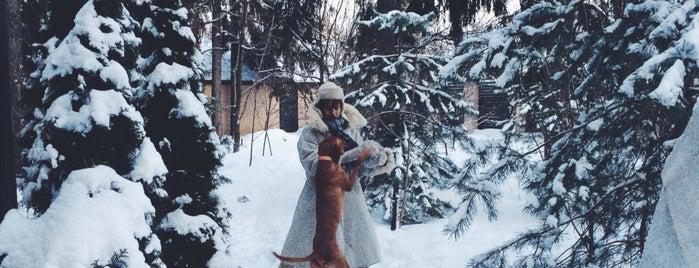 Болшево is one of สถานที่ที่ Natalie ถูกใจ.