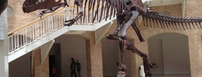 Fernbank Museum of Natural History is one of Tempat yang Disimpan Jéfer.