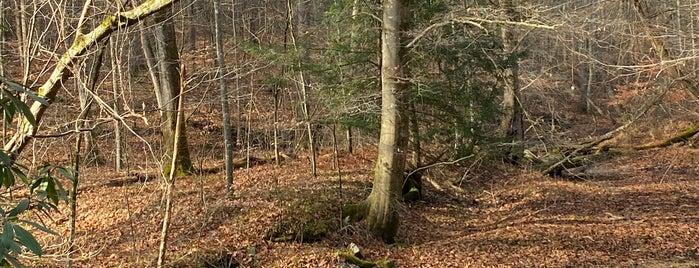 Kanawha State Forest is one of Amanda 님이 좋아한 장소.