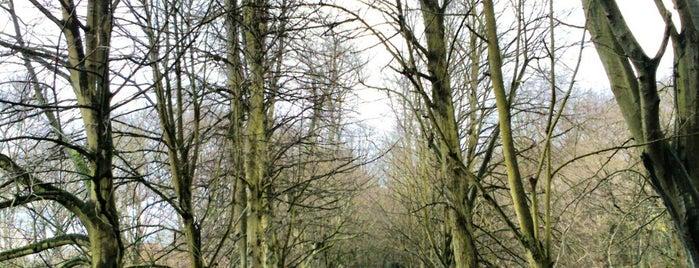 Hampstead Heath is one of London Ideas.