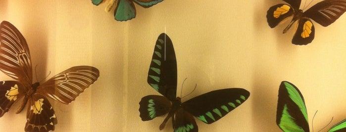Audubon Insectarium is one of สถานที่ที่บันทึกไว้ของ Natalie.