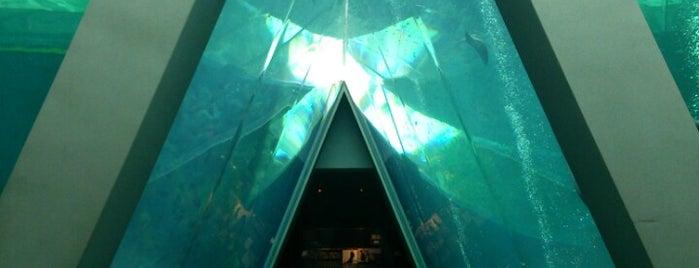 Aquamarine Fukushima is one of Katsu'nun Beğendiği Mekanlar.