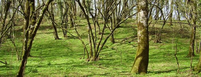 Sede Ente Parco dei Castelli Romani is one of Parchi e Riserve suggeriti da Roma&Più.