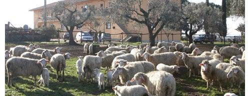 Lanuvio is one of Gli Agriturismi suggeriti da Roma&Più.