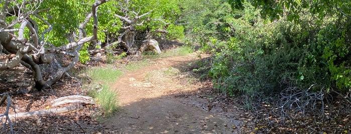 Shete Boka National Park is one of Curaçao Trip.
