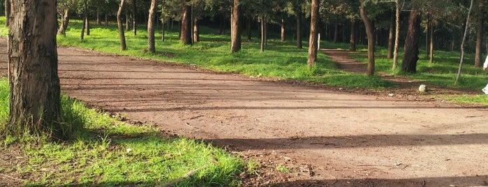 Parque Ecologico La Loma is one of Lugares favoritos de Francisco.