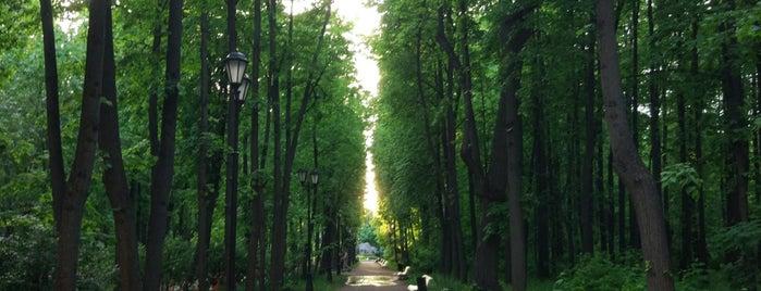 Neskuchny Garden is one of Orte, die Natasha gefallen.