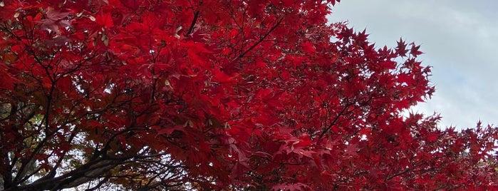 青蓮院庭園 is one of Posti che sono piaciuti a Nonono.