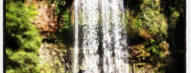 Millaa Millaa Falls is one of Ozzie Kiwi.