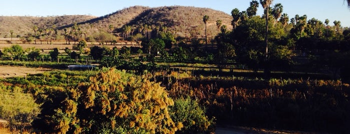 Los Tamarindos Organic Farm is one of A Taset Of Cabo 2014.