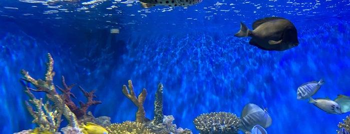 AquaRio - Aquário Marinho do Rio de Janeiro is one of Orte, die Dade gefallen.