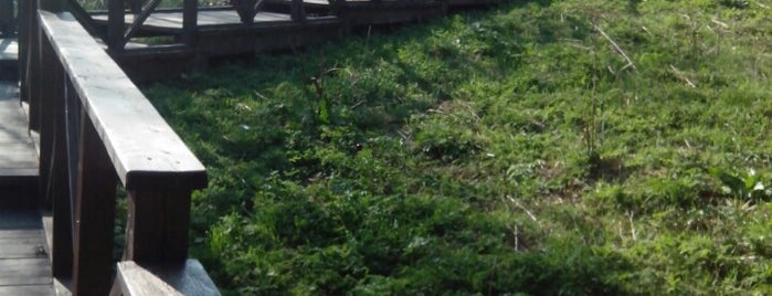Парк «Куркино» is one of Lieux qui ont plu à Marina.