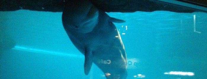 Abbott Oceanarium is one of Becky : понравившиеся места.