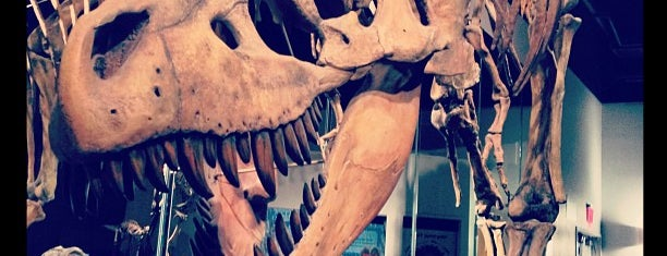 Arizona Museum of Natural History is one of Family Fun in Phoenix.