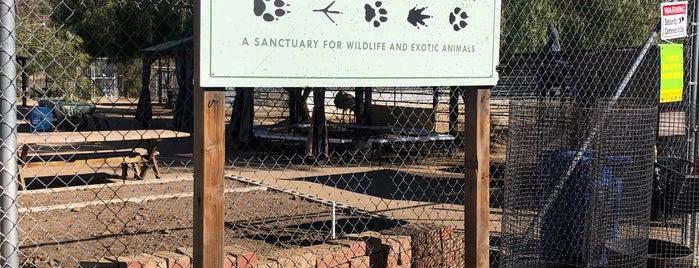 Animal Tracks is one of LA 2 TRY.
