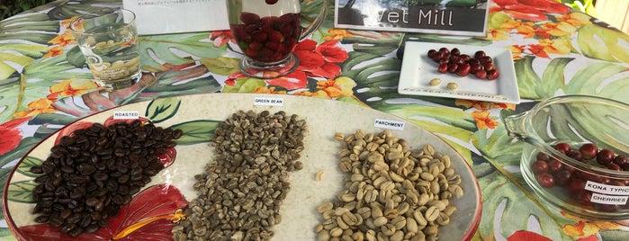 Mountain Thunder Coffee Plantation is one of Big Island.