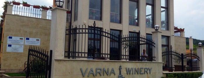 Varna Winery is one of Lugares favoritos de Seniora.
