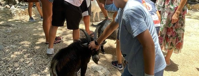 Akumal Monkey Sanctuary is one of Mexico: Quintana Roo and Yucatán.