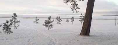 Нижний парк is one of Сестрорецк и побережье Финского залива.