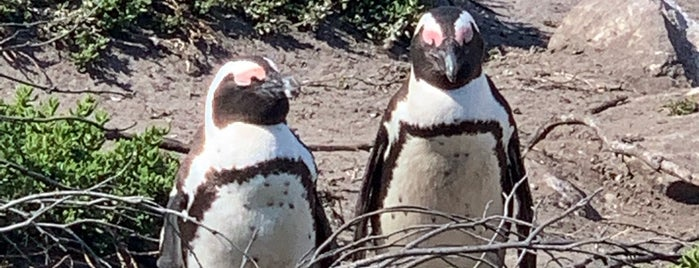 Stony Point Penguin Colony is one of South Africa.