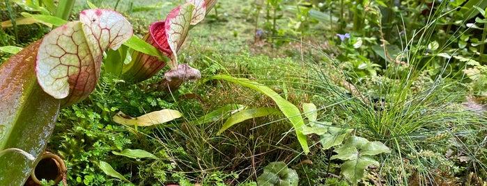 Оранжерея водных растений is one of Lieux sauvegardés par Galina.