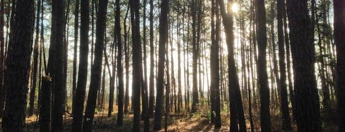 Kleb Woods Nature Preserve is one of Locais curtidos por M H.