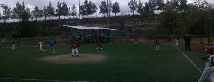 Liga de Beisbol Zaragoza is one of L.