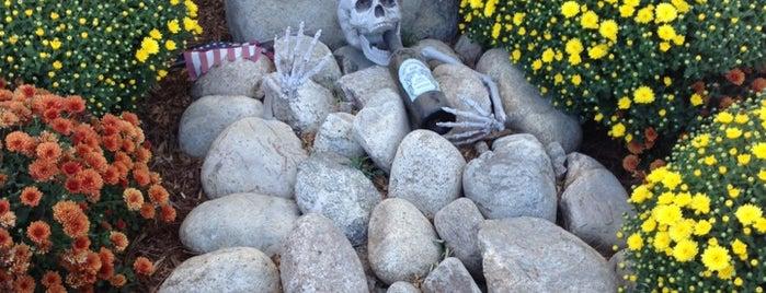 Graveyard Vineyards is one of Paso 2019.