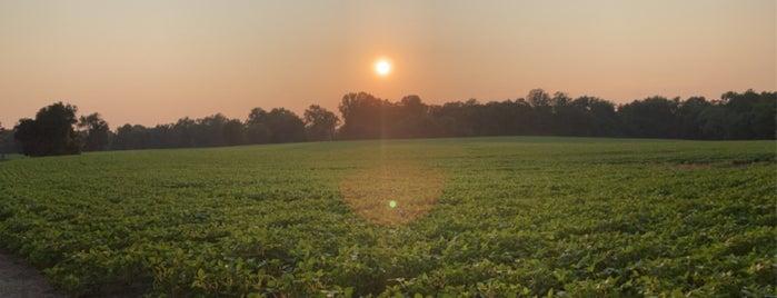 Gaines' Mill Battlefield | Richmond National Battlefield Park is one of Virginia Jaunts.