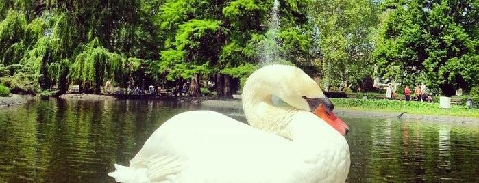 Dunavski park is one of NOVI SAD best place.