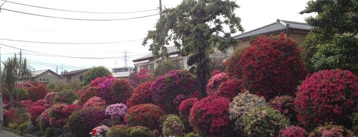 西沢つつじ園 is one of せたがや百景 100 famous views of Setagaya.