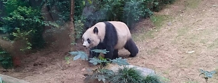 Panda Village is one of Lieux sauvegardés par Anikó.