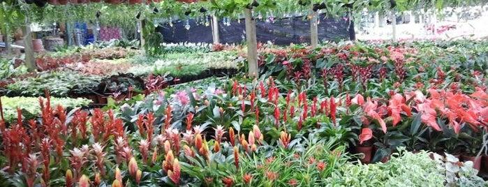 ศูนย์ไม้ดอกไม้ประดับคลอง15 is one of Lugares favoritos de Chaimongkol.