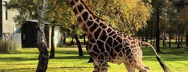 Parc zoologique de Thoiry is one of Bienvenue en France !.