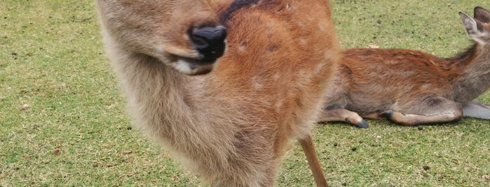 Nara Park is one of Attractions to Visit.