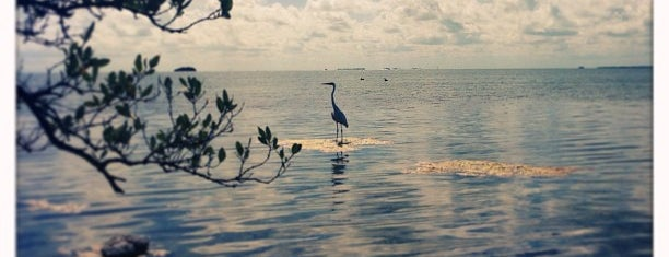 Florida Keys Wild Bird Center is one of SIGHTS.