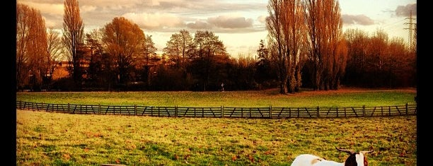 Streichelzoo im Südpark is one of Orte, die Angela gefallen.