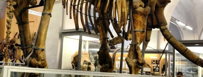 """Zoological Museum is one of 10 Анекдоты из """"жизни"""" и Жизненные """"анекдоты""""!!!."""