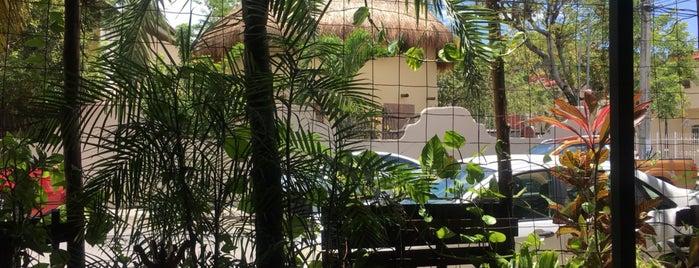 Las de asada is one of Lugares favoritos de Jonathan Josue.