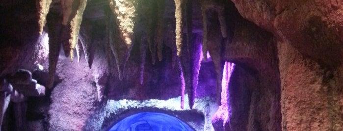 Antalya Aquarium is one of Orte, die Nejla gefallen.