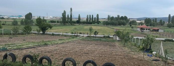 Çubukiçi is one of Kütahya | Merkez Köyler.