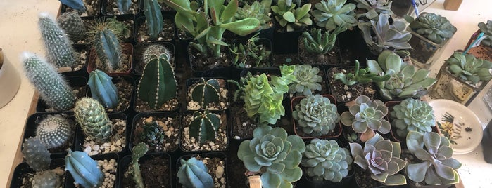 Succulent Native is one of ATX Check out.