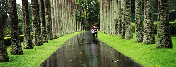 Royal Botanic Gardens is one of Srilanka.