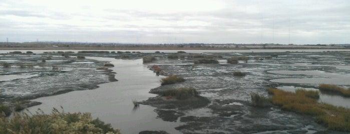 Swamps of Jersey is one of Tempat yang Disukai Shawn Ryan.