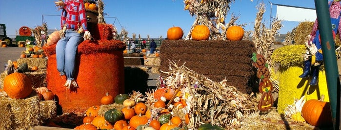 Galloping Grace Pumpkin Patch is one of ᴡ'ın Beğendiği Mekanlar.